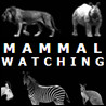 Mammal Watching