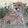 Kenya & Tanzania - Mega Mammal Safari 2015