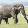 Tanzania - Cultural & Wildlife Extravaganza 2014
